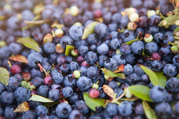 An Ode to the Blueberry Farmer