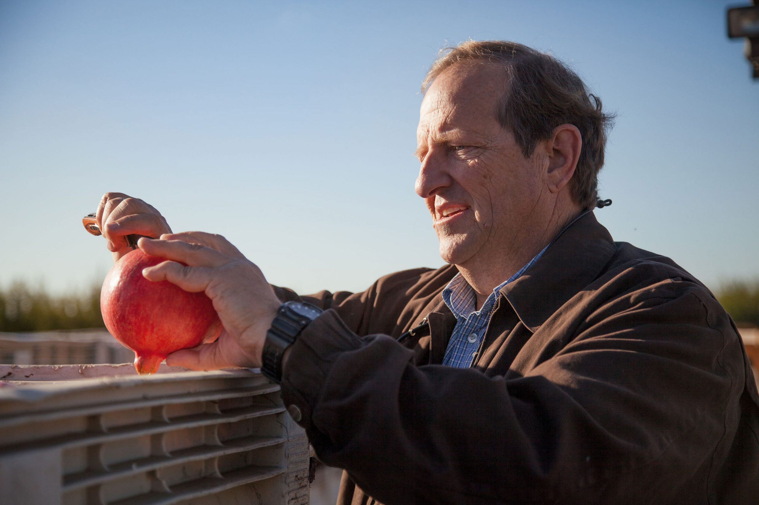 Chad Crivelli slices open an organic pomegranate